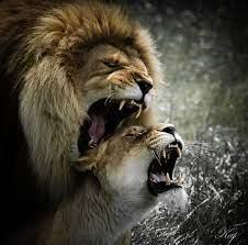 Monarchic Domination | Animaux, Lion, Fond ecran